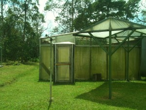 Double entrance to the bamboo greenhouse