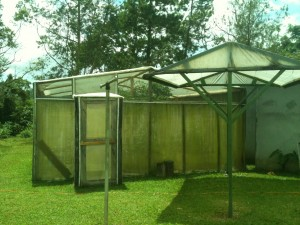 The bamboo greenhouse and shade